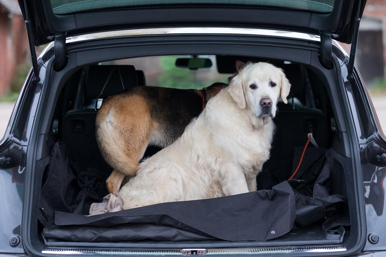 Autovakantie met hond