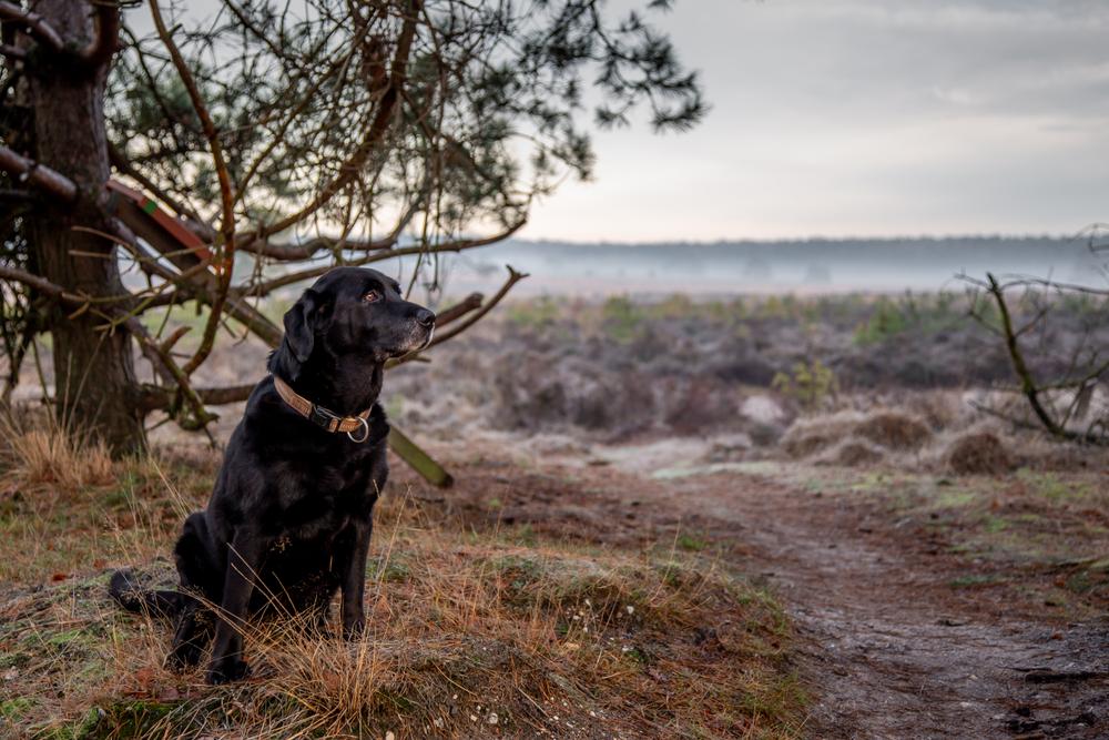 Wandelen op de Veluwe met de hond