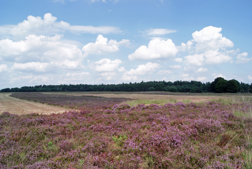 Wandelroute Veluwe 5 km